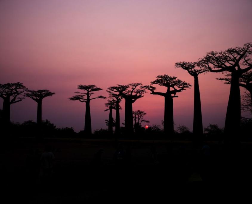 Baobab foto viaggi in Africa